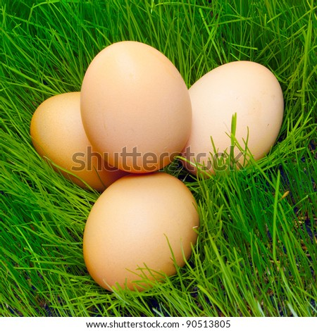 Fresh eggs in grass.
