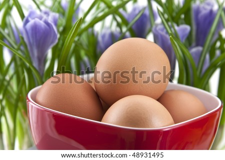 fresh eggs in red cup with crocuses