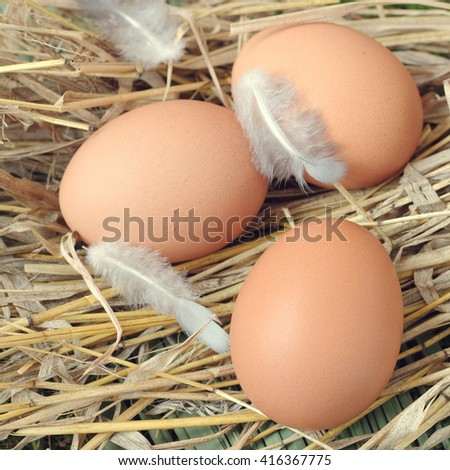 Fresh eggs on grass background in the chicken farm