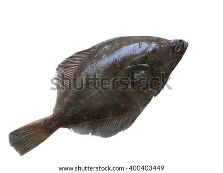 Fresh european flounder isolated on white background - stock photo