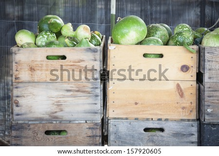 Fresh Fall Green Gourds and Crates in a Rustic Outdoor Fall Setting.  - stock photo