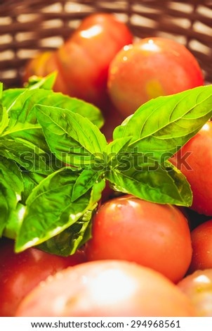 Fresh farm tomatoes and green basil leaves - stock photo