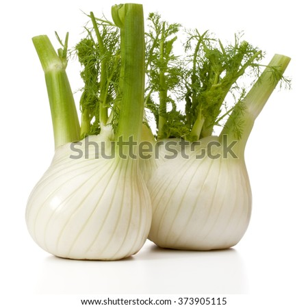 Fresh fennel bulb isolated on white background close up - stock photo