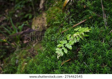 Fresh fern growing in the woods on moss - stock photo