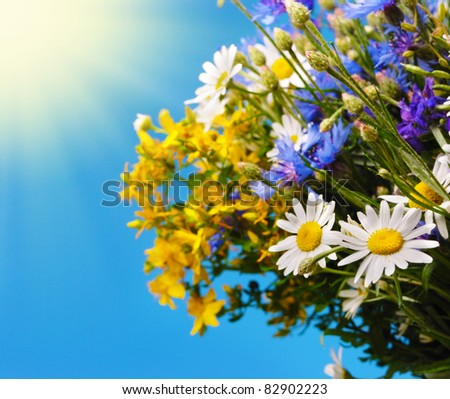 Fresh field flowers bouquet on the blue sky background - stock photo