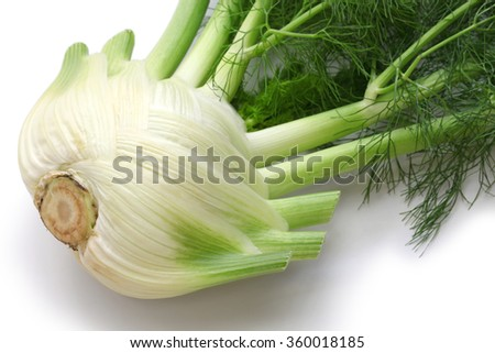 fresh finocchio, florence fennel bulb isolated on white background