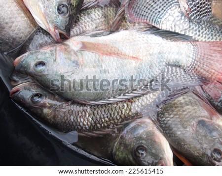 Fresh fish - stock photo