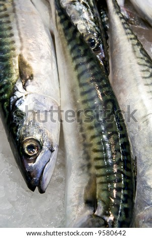 Fresh Fish 11 - stock photo