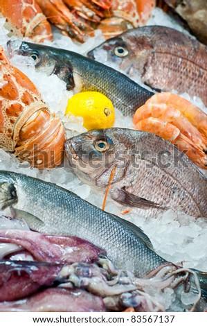 Fresh fish and seafood arrangement - stock photo
