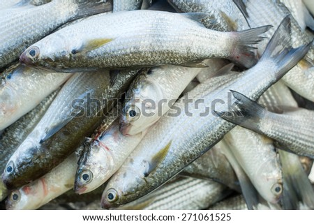 Fresh fish at seafood market - stock photo
