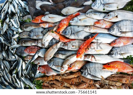 Fresh fish at the market - stock photo