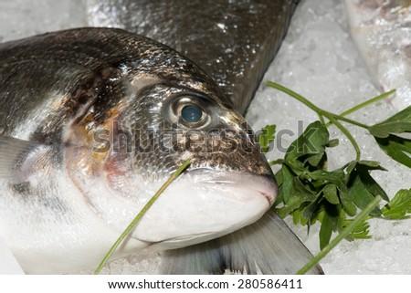 fresh fish at the market close up detail - stock photo