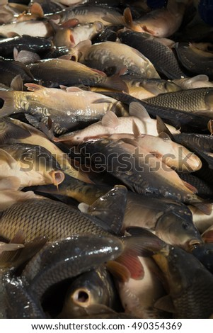 Fish farming farm breeding carp pike stock photo 490231339 for Fish with scales and fins