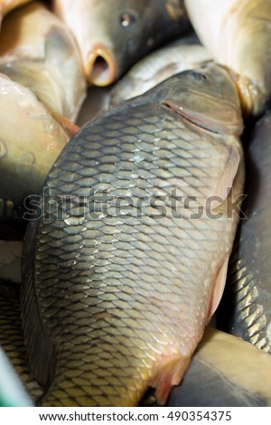 Stock images royalty free images vectors shutterstock for List of fish with fins and scales