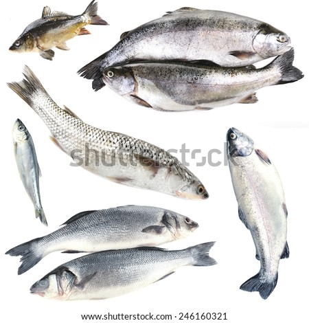 Fresh fish collage, isolated on white - stock photo