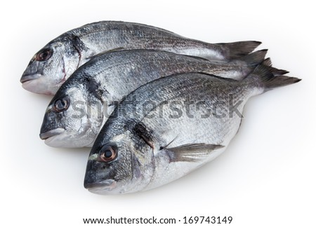 Fresh fish dorado isolated on white background with clipping path - stock photo