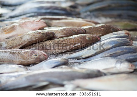 Fresh fish for sale at a  market - selective focus - stock photo