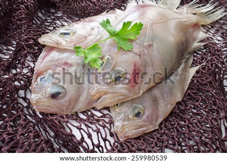 fresh fish in fishing net