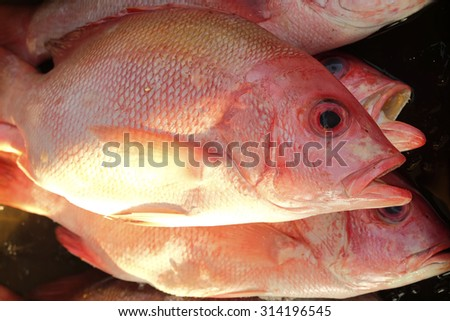 fresh fish in tray for cooking in market - stock photo