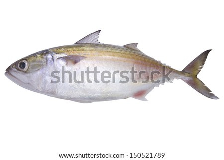 Fresh fish in white background