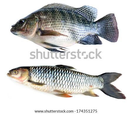 Fresh fish isolated on a white background - stock photo