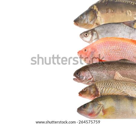 Fresh fish isolated on white as background - stock photo