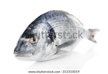 Fresh fish isolated on white background - stock photo