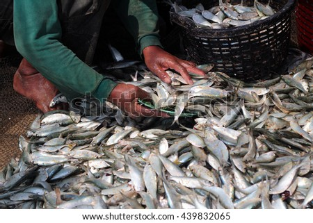 fresh fish just brought back from the sea to be sorted.  - stock photo