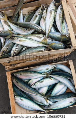 Fresh fish just caught in boxes going to market - stock photo