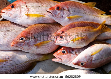 fresh fish on a asian market