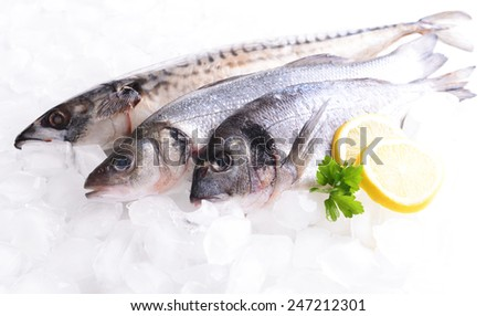 Fresh fish on ice - stock photo