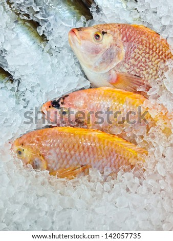 Fresh fish on ice in the market, Thailand