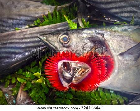 Fresh fish on ice on the market - stock photo