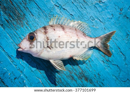 fresh fish on the blue wooden floor