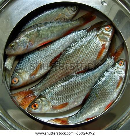 Fresh fish roaches perch european freshwater stock photo for Freshwater fish food