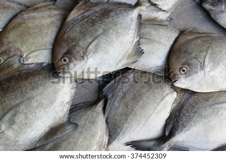 Fresh fish. Seafood in market. Background. - stock photo