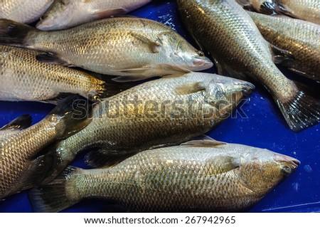fresh fish sell in fish market - stock photo