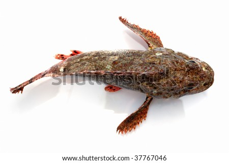 Fresh fish stone perch from above on white background - stock photo