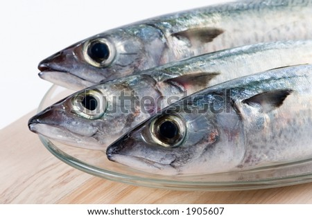 Fresh fishes - stock photo