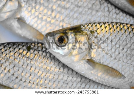 Fresh fishes - stock photo