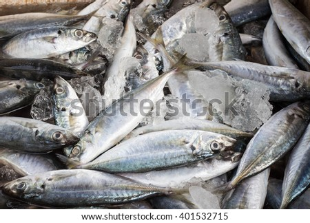 Fresh fishes in box