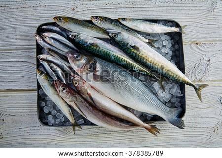 Fresh fishes mix hake sea bass sardine mackerel anchovies - stock photo