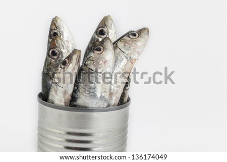 fresh fishes, sardine, in tin can as a preserved food - stock photo
