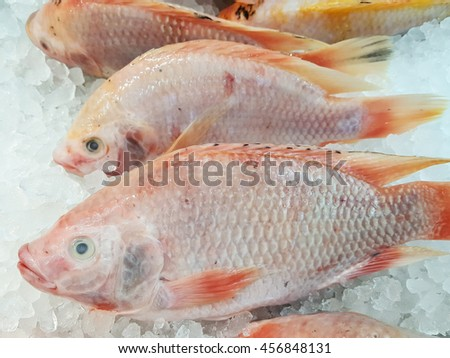 Fresh fishes with ice backgrounds