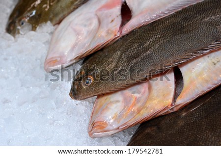 Fresh flounder fish on ice on display in fishermen market. Close up
