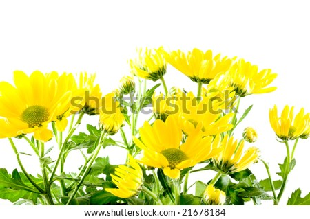 Fresh flowers are yellow chrysanthemums.