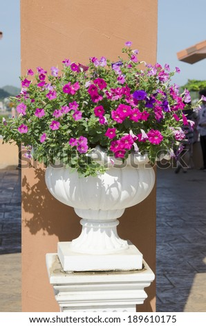 Fresh flowers in pots in the garden. - stock photo