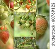 Fresh food collage - stock photo