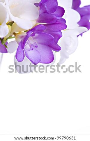 Fresh fresia flowers isolated over white background - stock photo