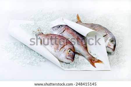 Fresh frozen fish on white paper with ice. - stock photo